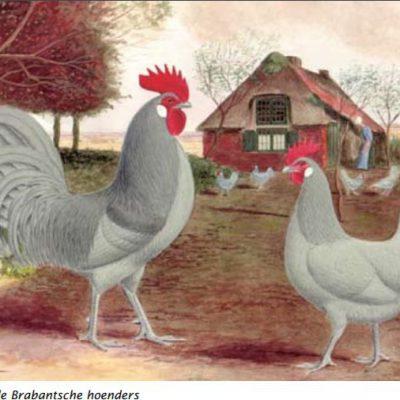 Roodgezadelde Brabantsche hoenders